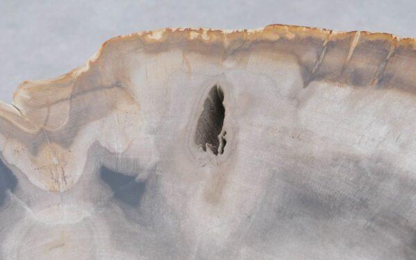 Couchtisch versteinertes Holz 37244