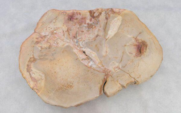 Couchtisch versteinertes Holz 37251