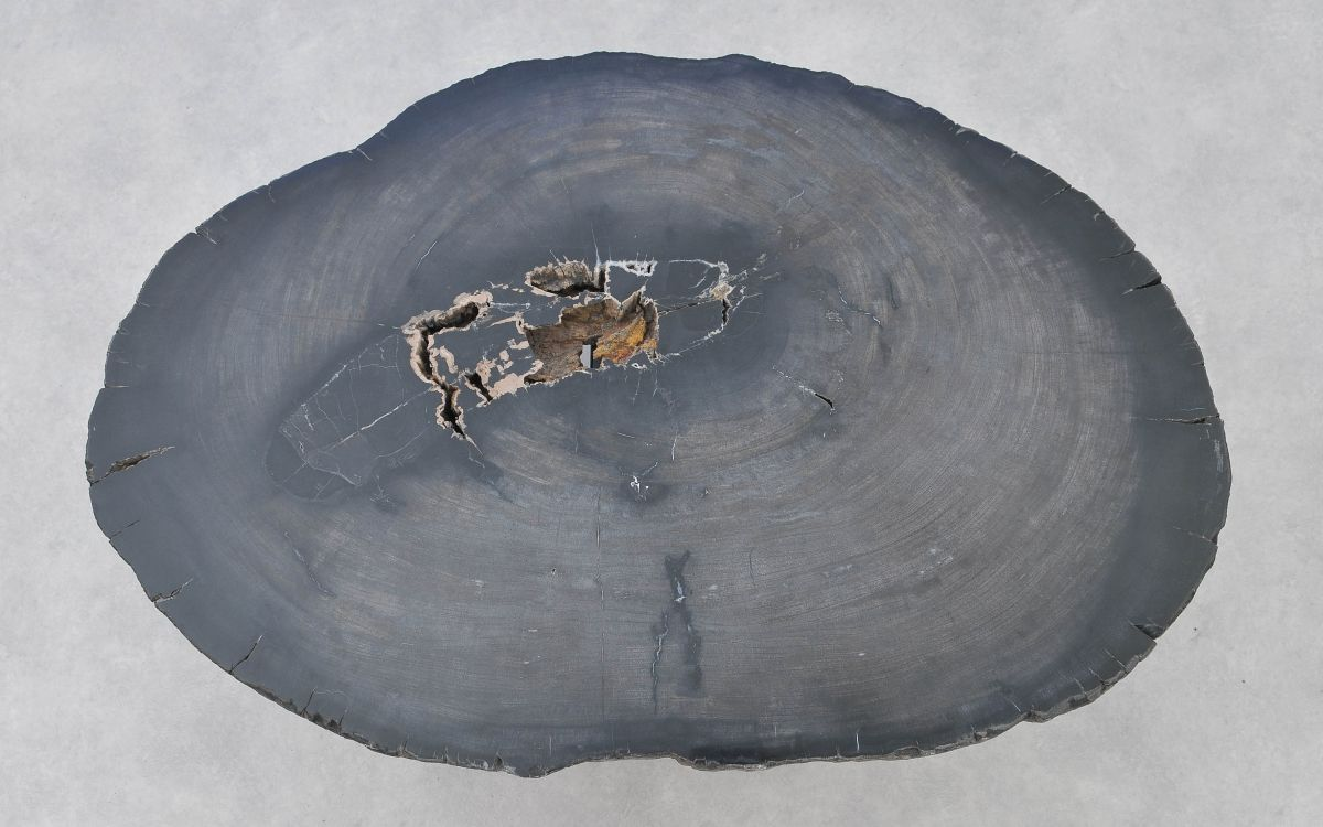 Couchtisch versteinertes Holz 37266