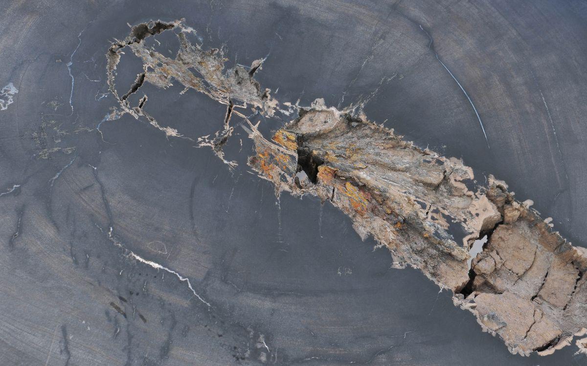 Couchtisch versteinertes Holz 37271