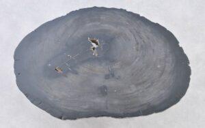 Couchtisch versteinertes Holz 37282