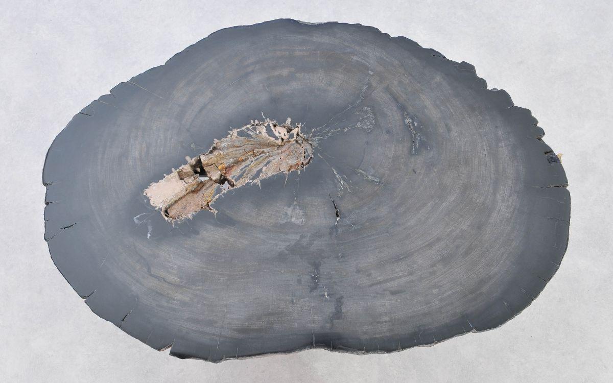 Couchtisch versteinertes Holz 37284