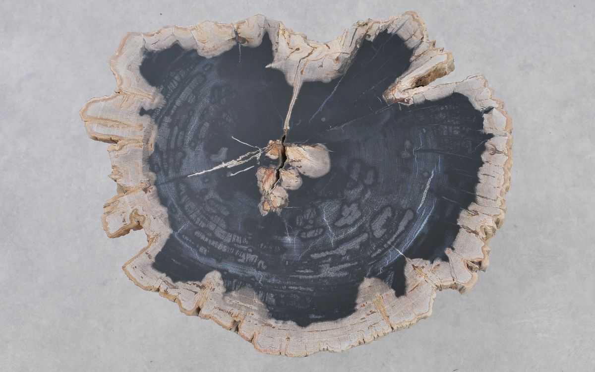 Couchtisch versteinertes Holz 37372
