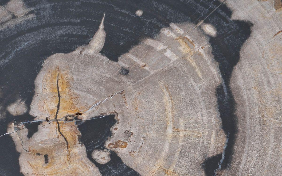 Couchtisch versteinertes Holz 37374