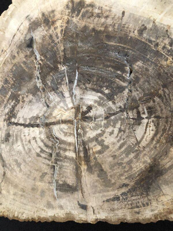 Mesa de centro madera petrificada 30137