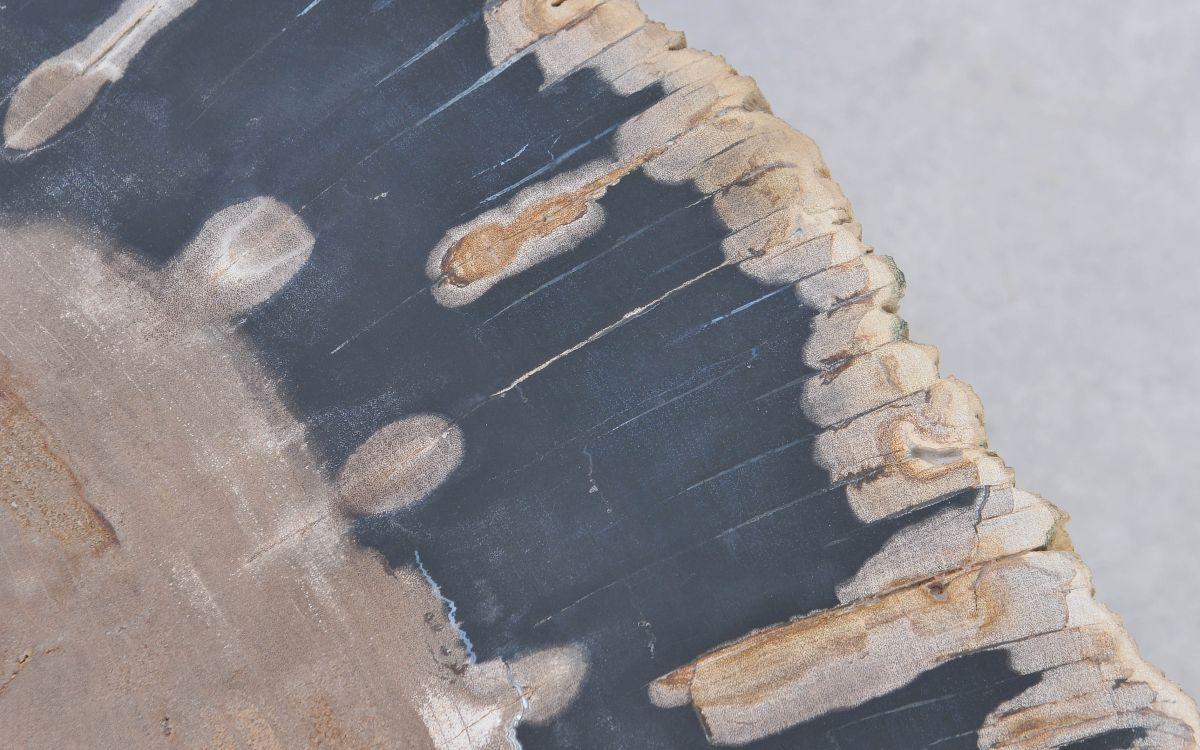 Salontafel versteend hout 37192