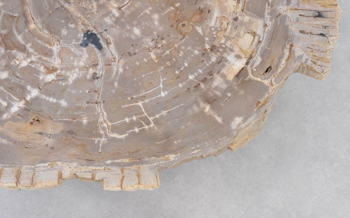 Table basse bois pétrifié 37162