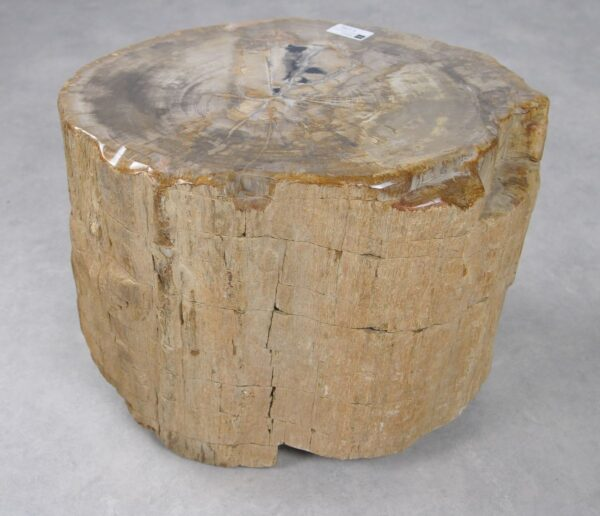 Bijzettafel versteend hout 30022